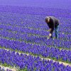modry hyacint blue jacket 3