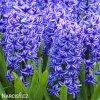 Hyacint Blue jacket 5