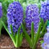modry hyacint blue jacket 6