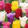 trepenite tulipany smes barev mix 2