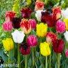 trepenite tulipany smes barev mix 4