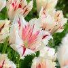 bilocerveny trepenity tulipan carousel 7
