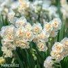 bílý plnokvětý narcis bridal crown 2
