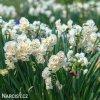 bílý plnokvětý narcis bridal crown 4