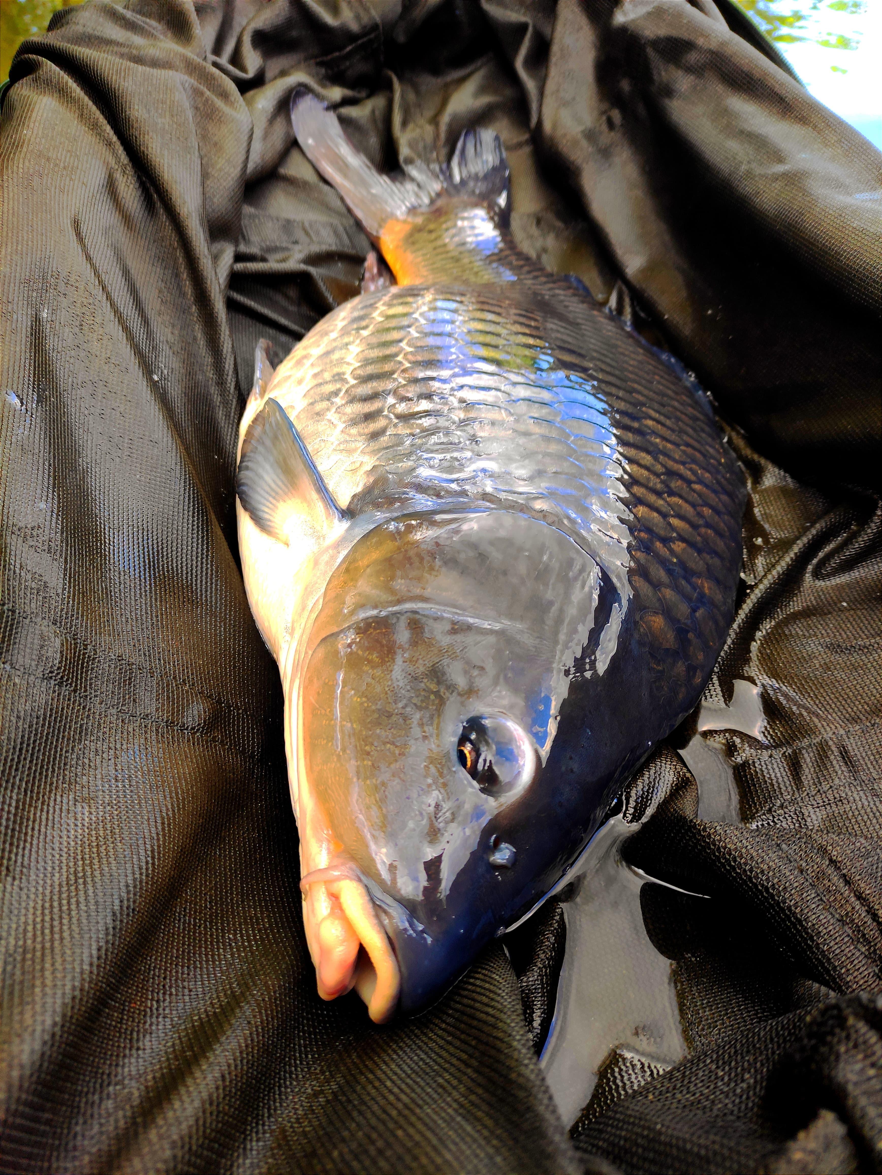 Na rybolov jen na krátkou chvíli