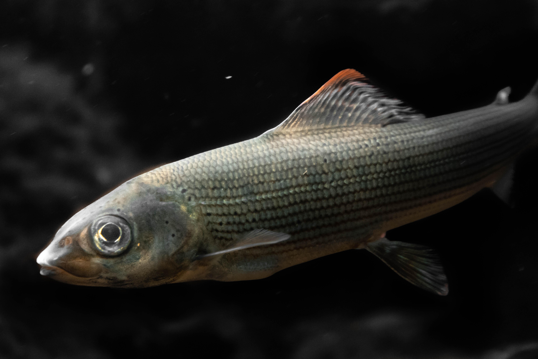 Základní druhy ryb (7.část)
