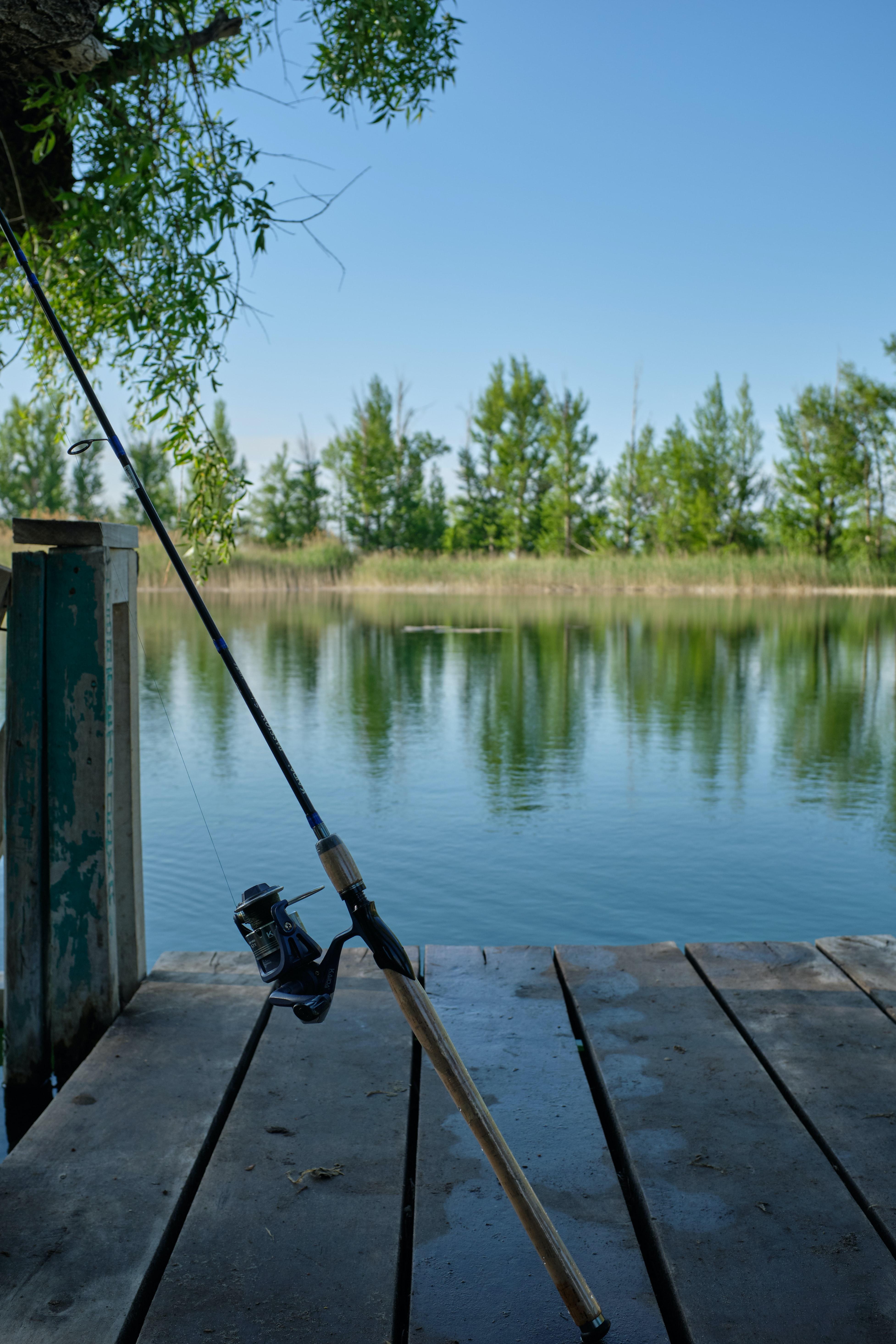 Základní druhy ryb v našich vodách (3.část)