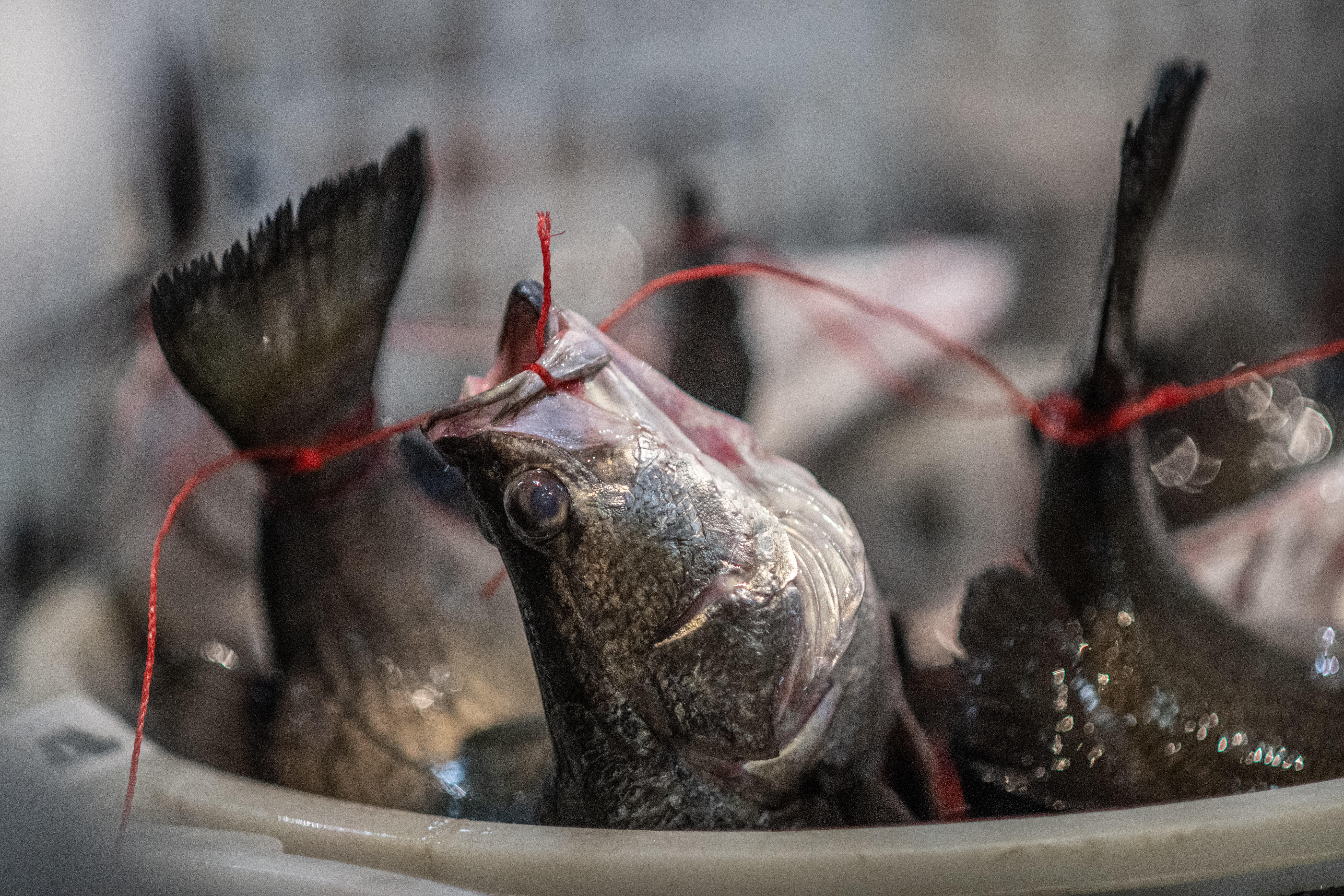 Etika rybáře