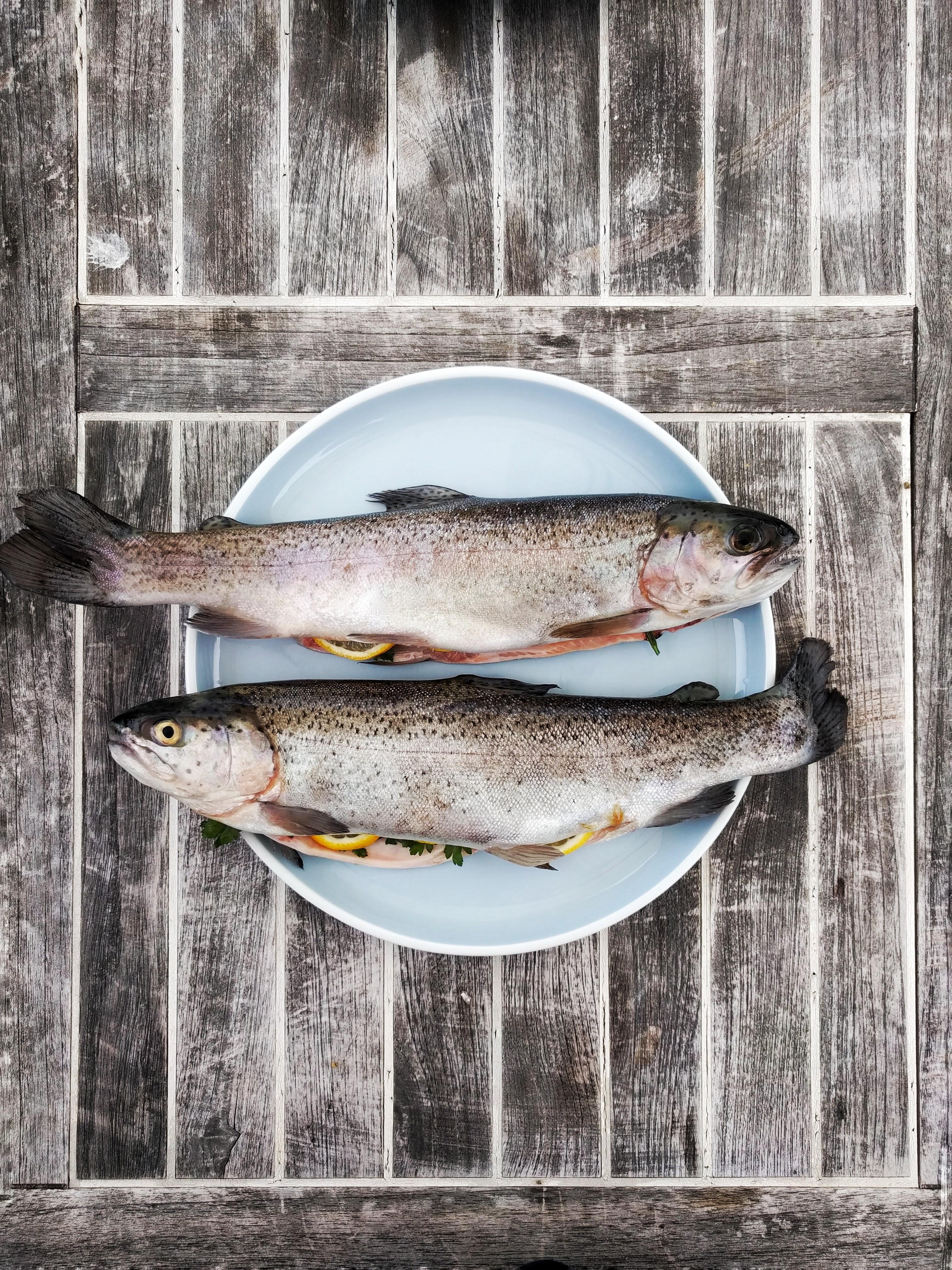 Doby hájení ryb
