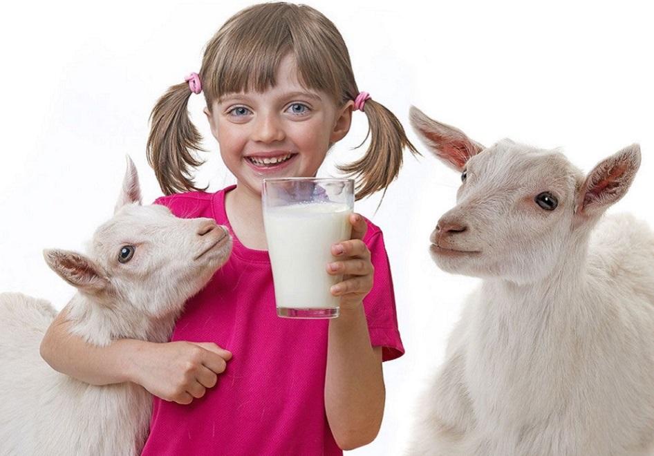 Kozí mléko ochrání před stresem a psychickými problémy děti i dospělé