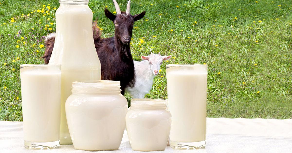 Kozí mléko v kojenecké výživě - závěry nové studie