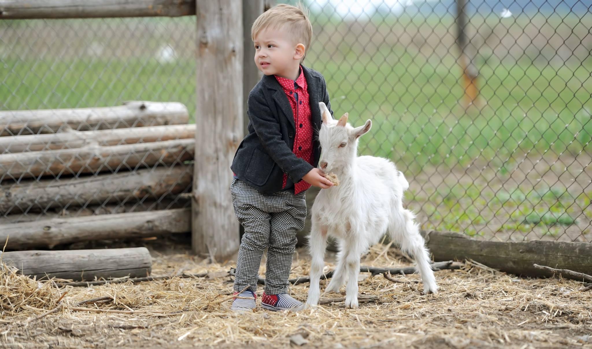 Proč je kozí mléko lepší než kravské