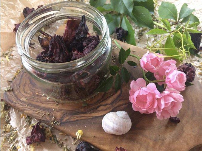 Ibišek - řezaný květ