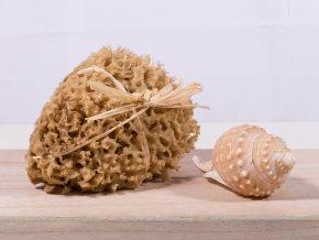 Mořská houba