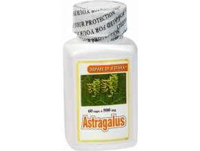 Kozinec blanitý Astragalus