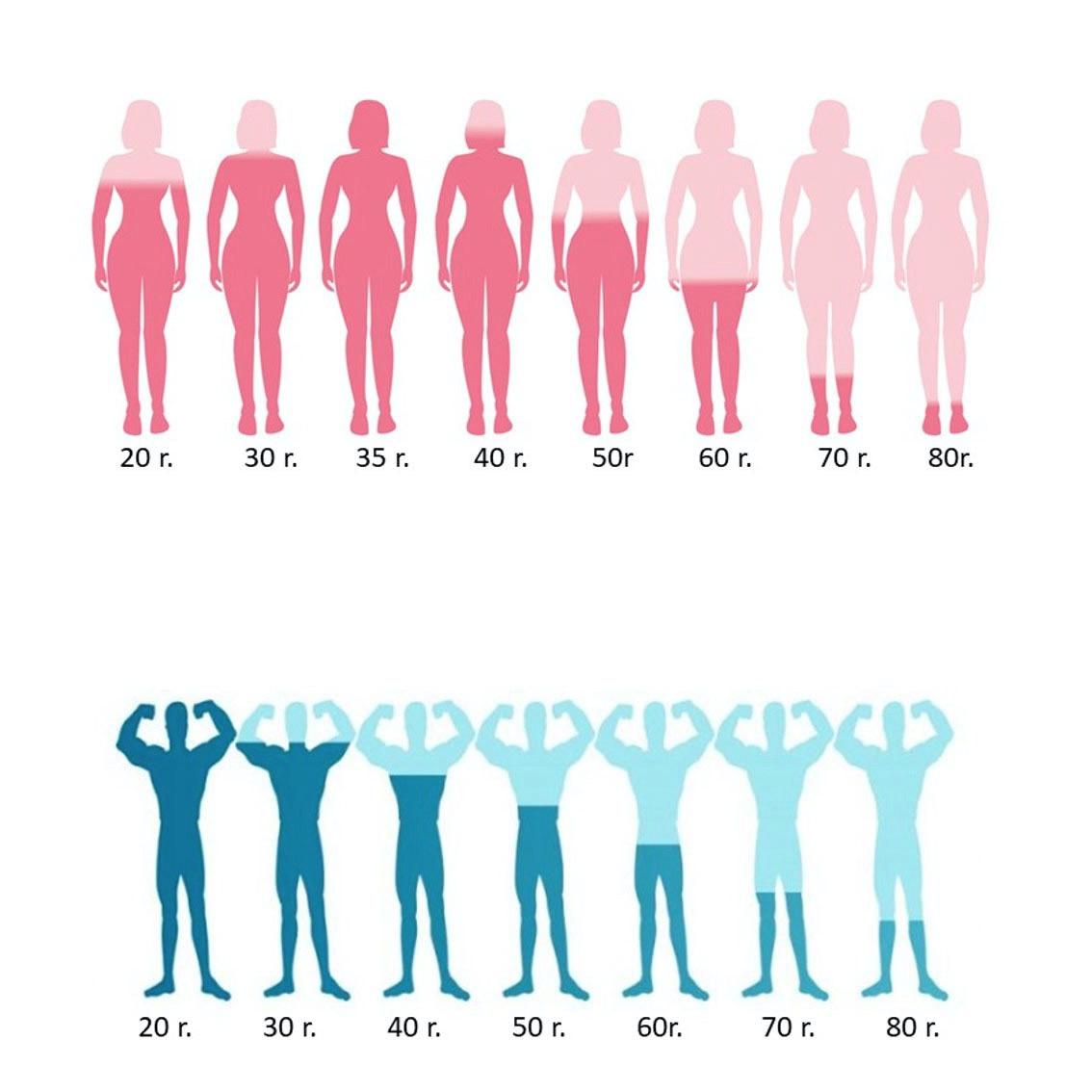 A hormonháztartás változásai a középkorú férfiak és nők esetében