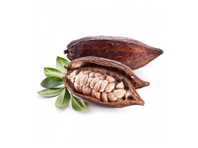 cacao fruit from south america