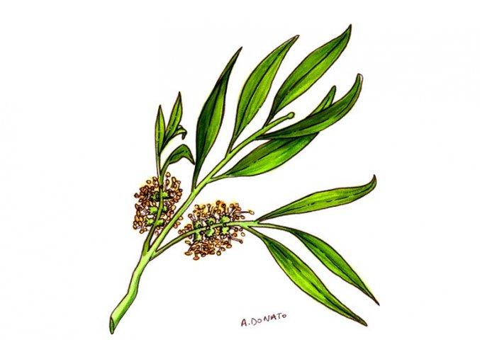 Tea Tree Oil004 3x2