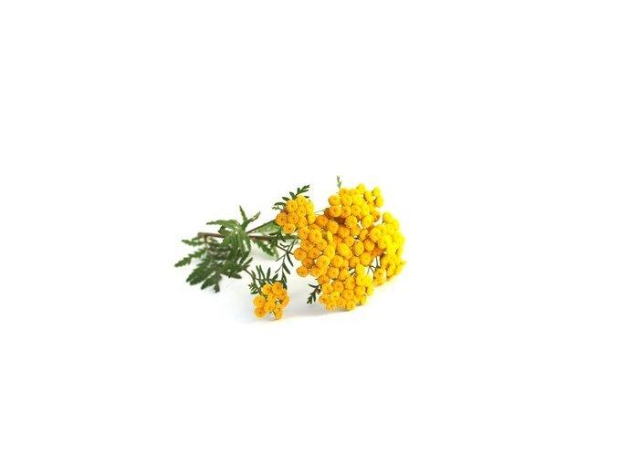 tansy tanacetum vulgare main value 260nw 706900231