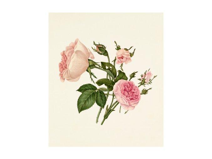 EO Růže Damascana BIO 1ml