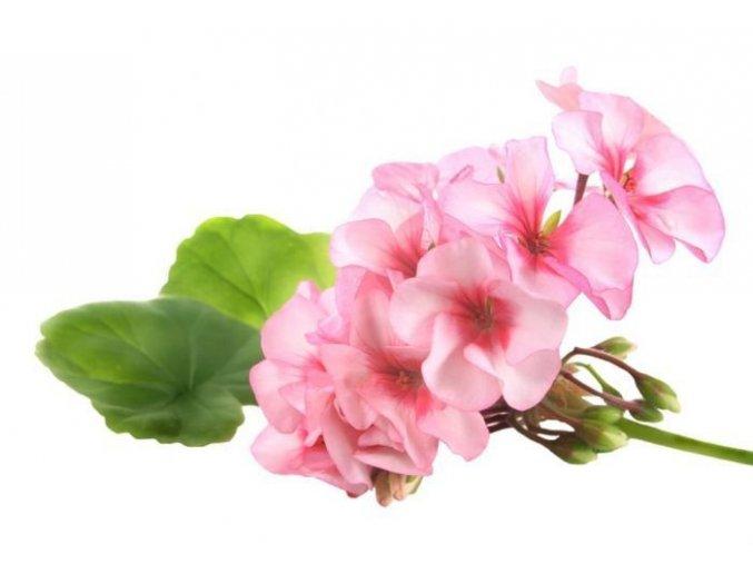 geraniumbourbon