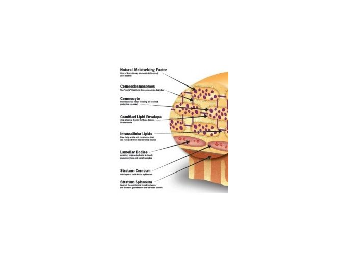 natural moisturizing amino acids กรดอะมิโน บำรุงผิว