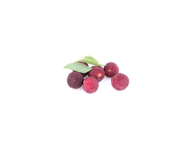 myrica rubra wax berry bayberry leaves isolated white 54843095