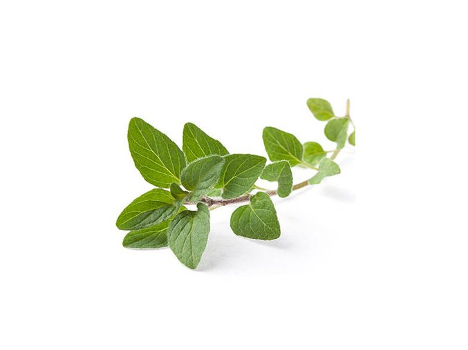 OREGANO ESSENTIAL OIL INDIAN ORIGIN.jpg 350x350