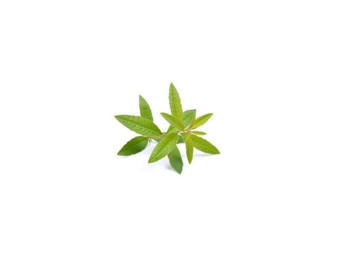 Lemon Verbena 96123.1454415032.1280.1280
