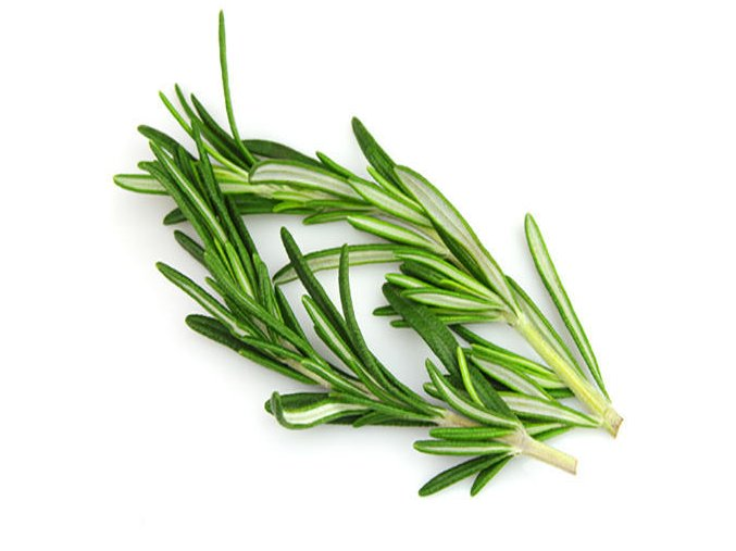 rosemary leave 500x500