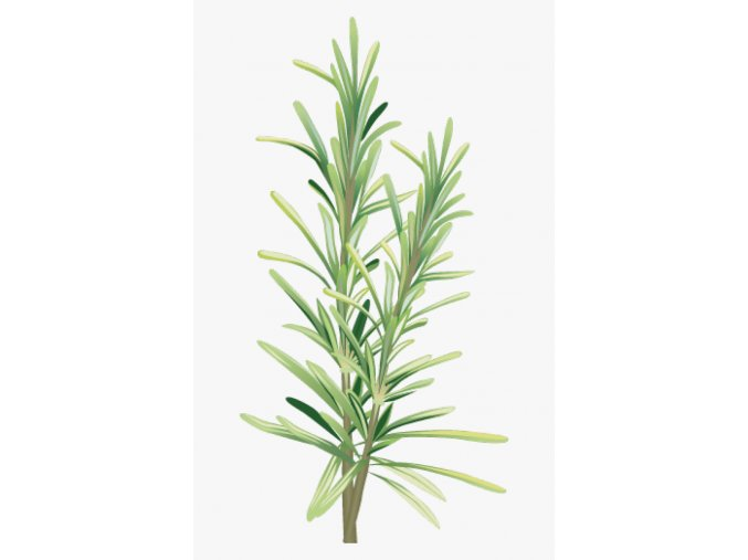 504 5040845 spices and herbs rosemary clipart hd png download