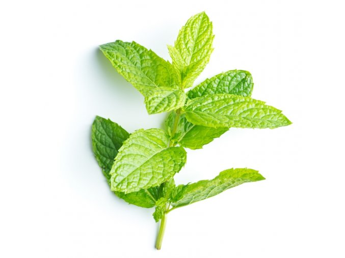 Peppermint Hydrosol Mentha piperita Hydrolat ProductPic
