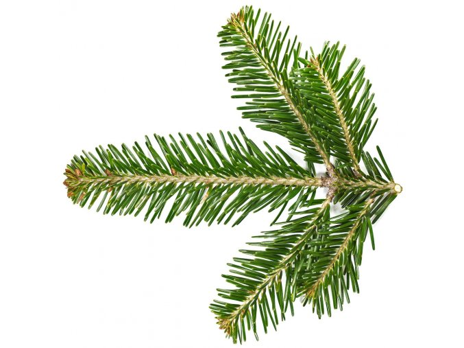 Silver Fir Needle Essential Oil Abies alba ProductPic