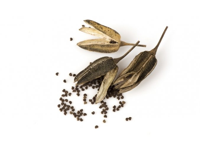 benefits of ambrette seed oil