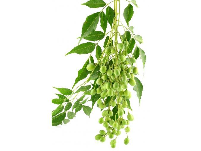 Neem leaves fruit