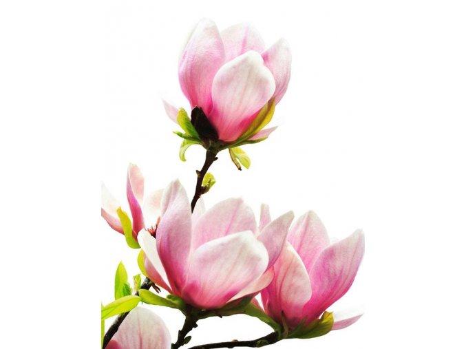 magnolia bark extract 98
