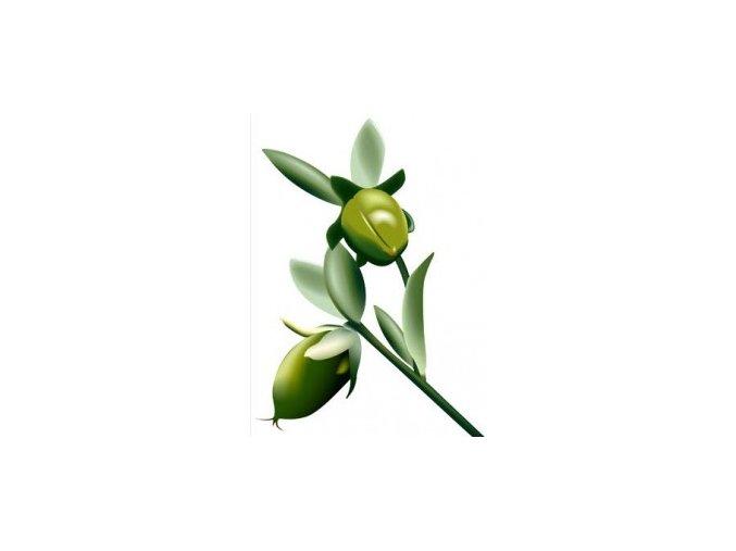 jojoba oil golden น้ำมันโจโจ้บา ออย สกัดเย็น