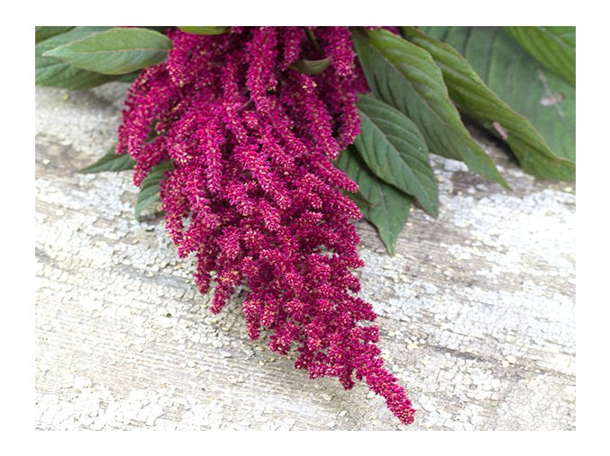 amaranth red garnet