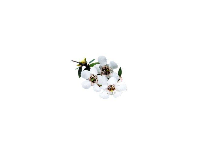 Manuka Flower 0.png.opt233x161o0,0s233x161