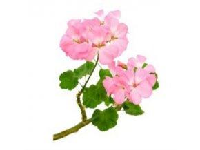 andio geranium illoolaj 300 300