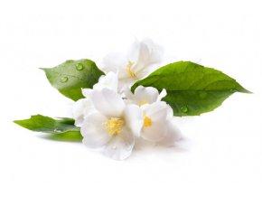 depositphotos 10709130 stock photo jasmine white flower isolated on