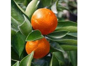 EO Mandarinka červená Bio 5ml