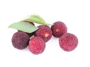 myrica rubra wax berry bayberry leaves isolated white 54843095
