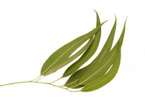 eucalyptus citriodora essential oil