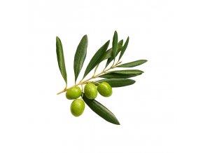 Olivový list pudr 100g