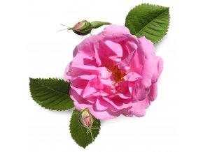 Růžový vosk 10g