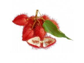 xannatto lipstick tree seeds bixa orellana.jpg.pagespeed.ic.v5z WrefVU