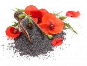 makovy kvet 1024x768