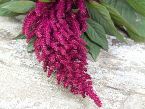 amaranth red garnet