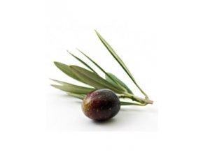 squalane olive สควาเลน มะกอก